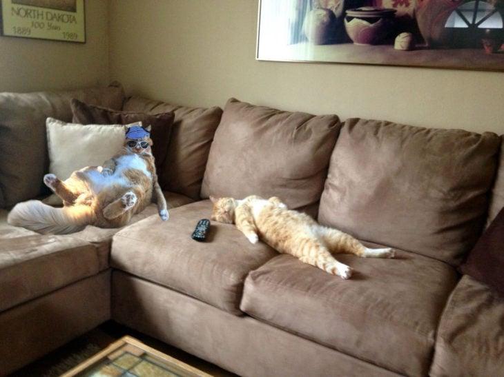 gatos aburridos