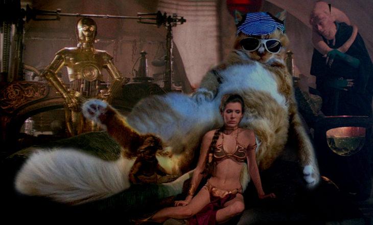 Jabba gato
