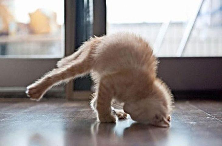 Gato en posición rara