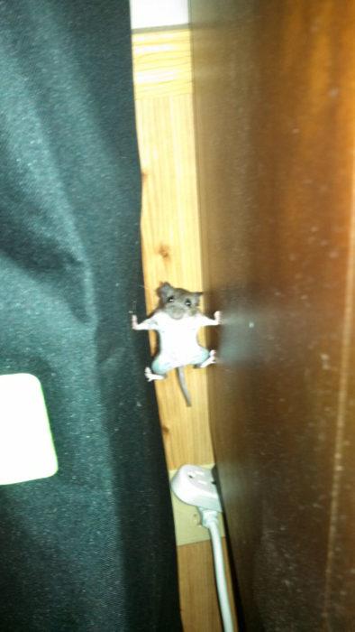 Ratón en posición extraña