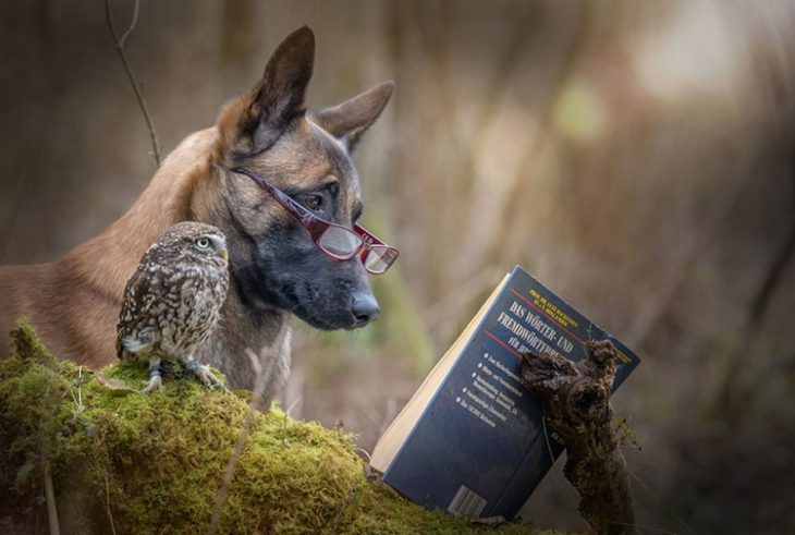 Perro y búho son amigos inseparables