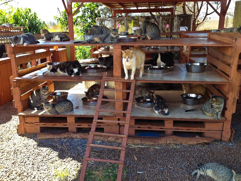 El Santuario Del Gato En Hawaii 161 Todo Un Para 237 So De Mininos