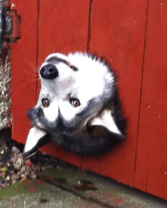 hola perro
