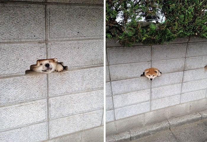 Perritos que estaban desesperados por saludar a los humanos