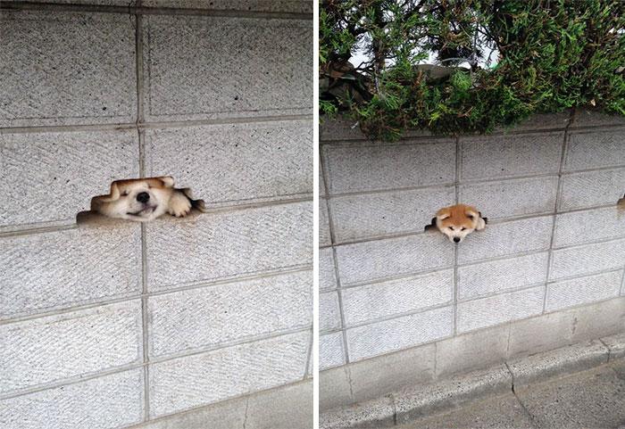 perro scando l acabeza de muro