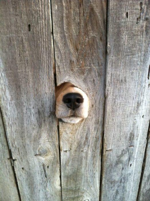 nariz saluda