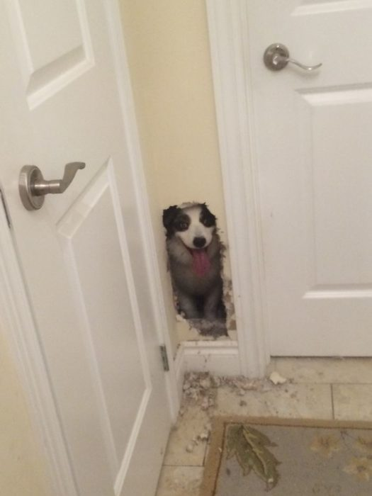 perro agujero