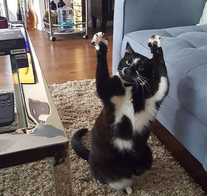 gato gol