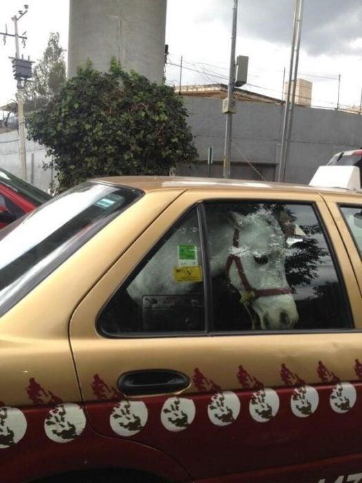 caballo en taxi