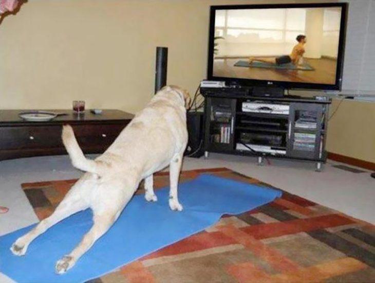 Perro viendo clase de yoga