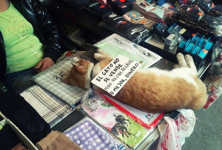 gato con un anuncio en su costado, recostado sobre mercancia en venta
