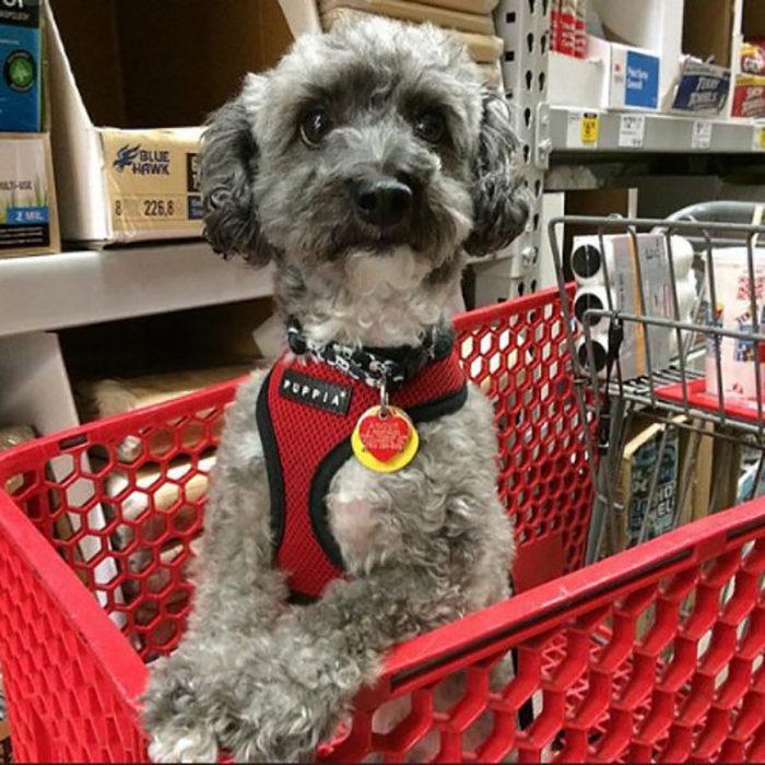 perrito en carro de compras