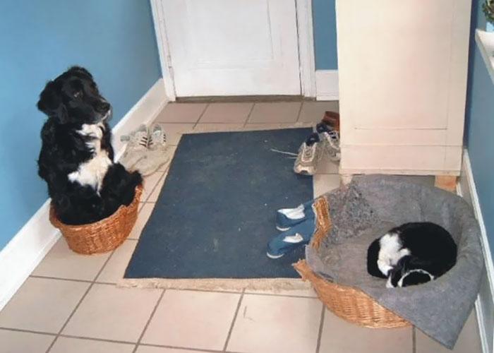 perro negro y gato negro