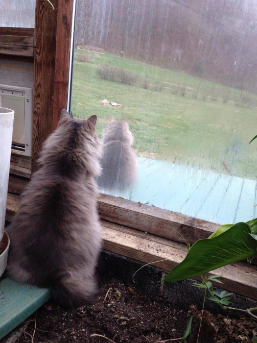 gato que se contempla a sí mismo
