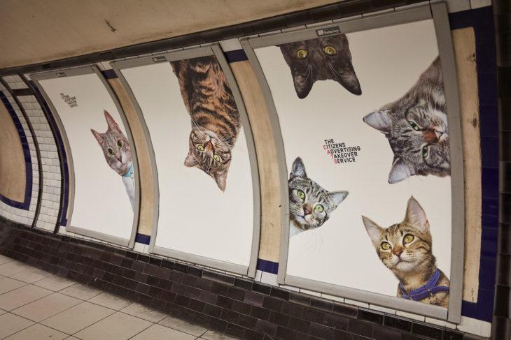 estación anuncios de gatos