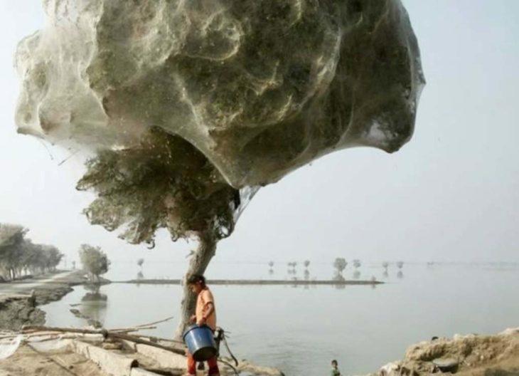 árbol cubierto de telarañas