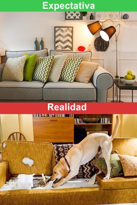 expectativa y realidad casa