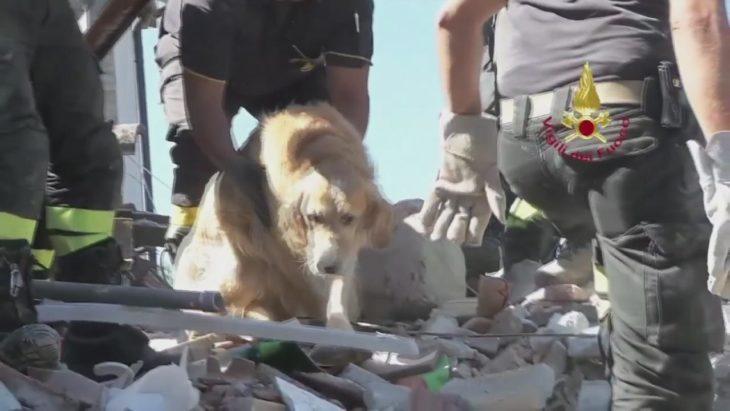 perrito entre escombros