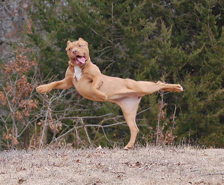 perro en pose rara