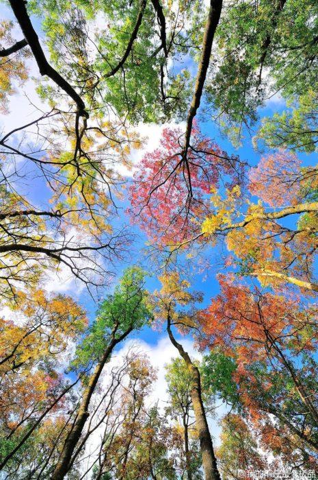 colores del otoño en hojas de árboles