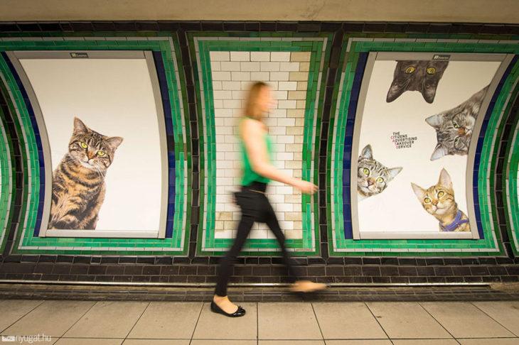 fotos de gatos en estación de metro londres