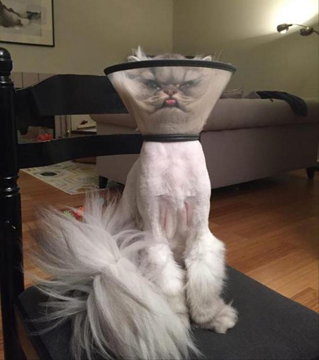gato con cilindro en la cabeza