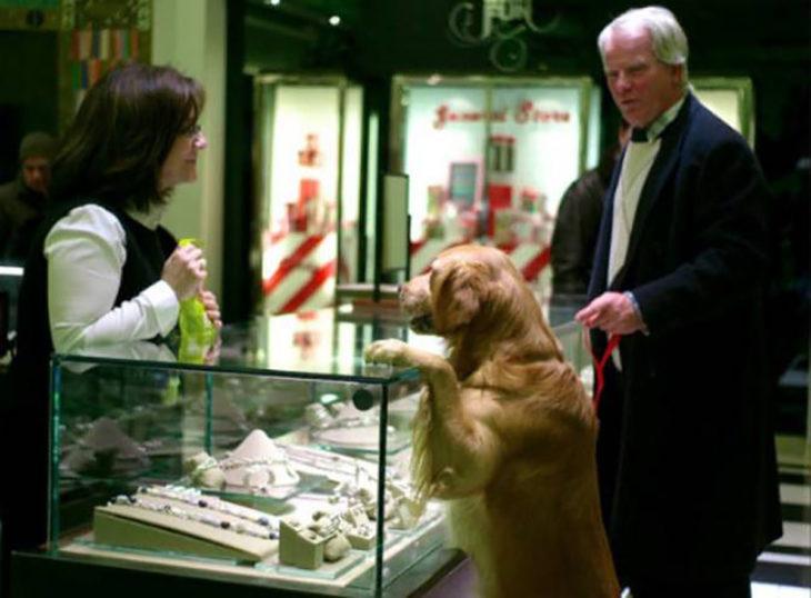 perro en joyería
