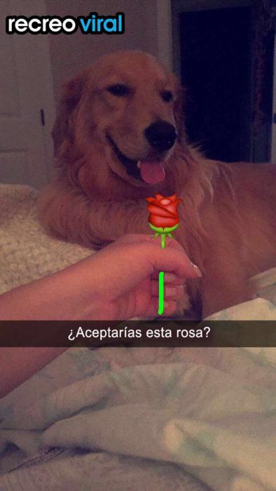 mano de persona dando una flor dibujada a un perro