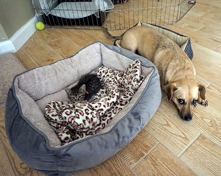 gato y perro recostados al lado