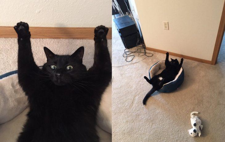 gato negro con manos en el aire