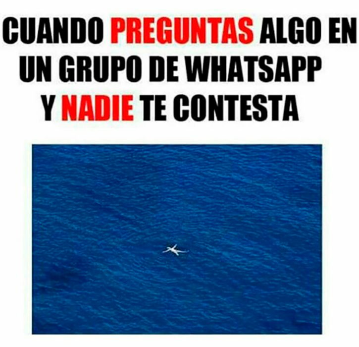 meme whatsapp