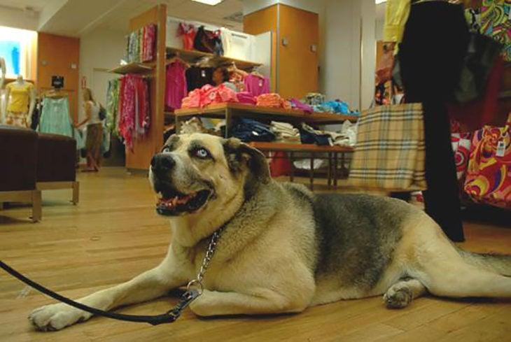 perro recostado en tienda departamental