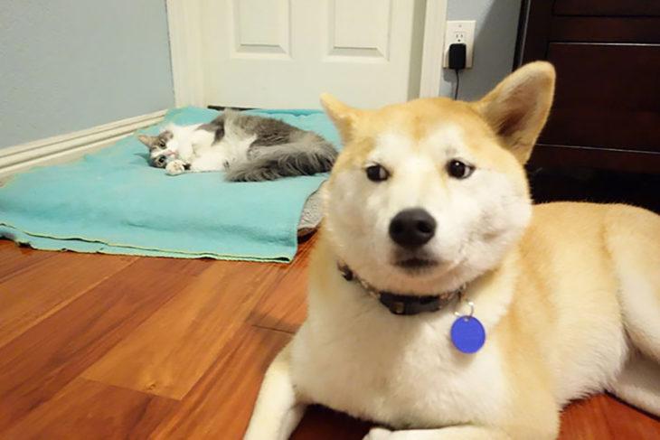 perro mirando sospechosamente