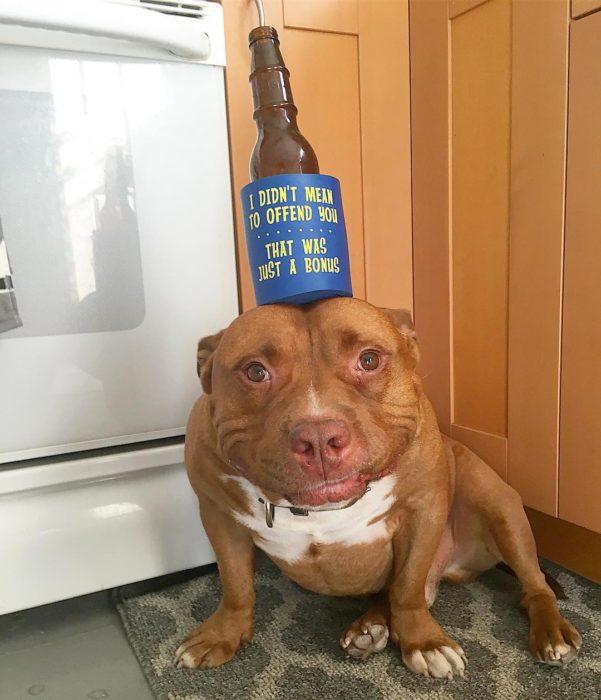 perrito con cerveza en la cabeza