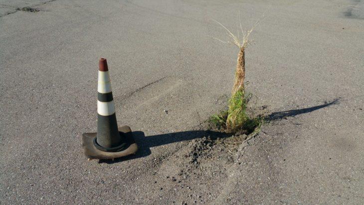 plantas que crecieron dentro de un cono vial