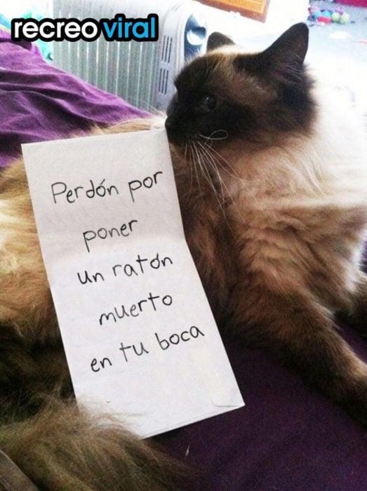 gato con nota