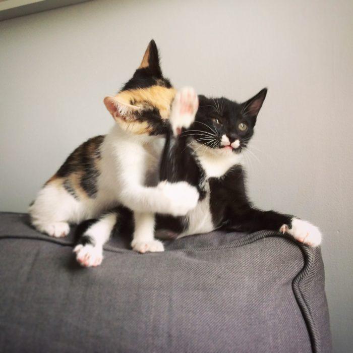 gato rechazando a otro gato