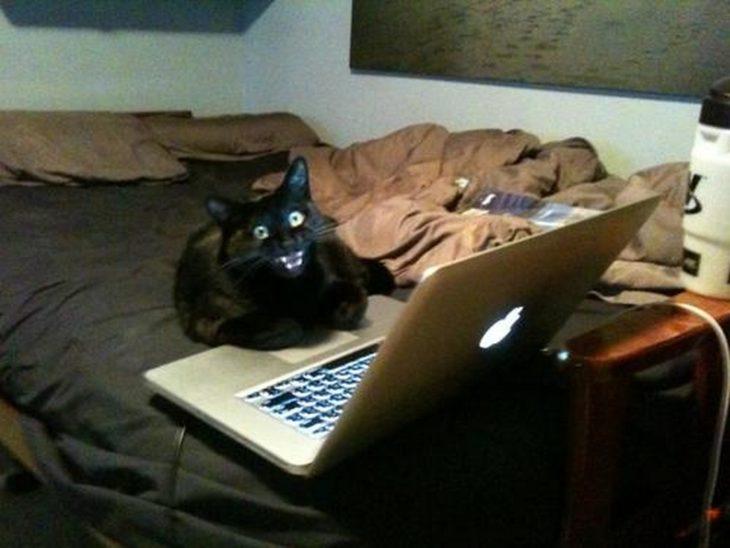 gato frente a una computadora