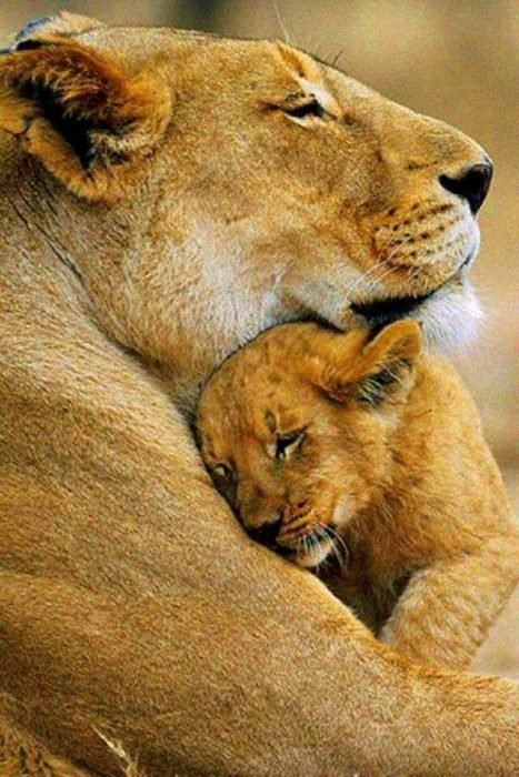 leona y cachorro