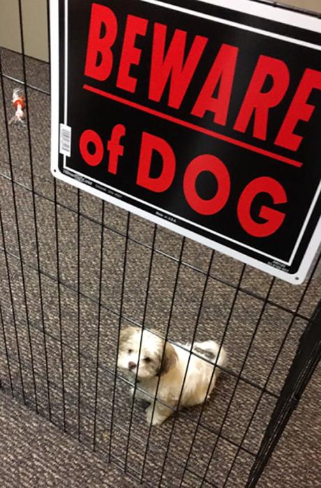 perrito peludo dentro de una celda