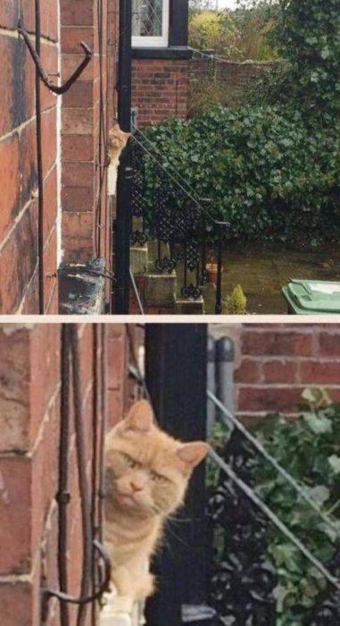 gato mirando con rencor