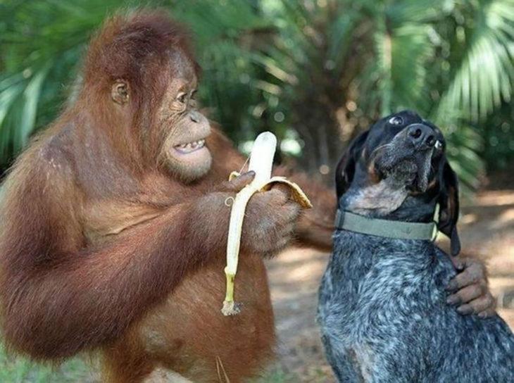 primate, banana y perro