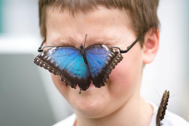 mariposa posa en los lentes de un niño