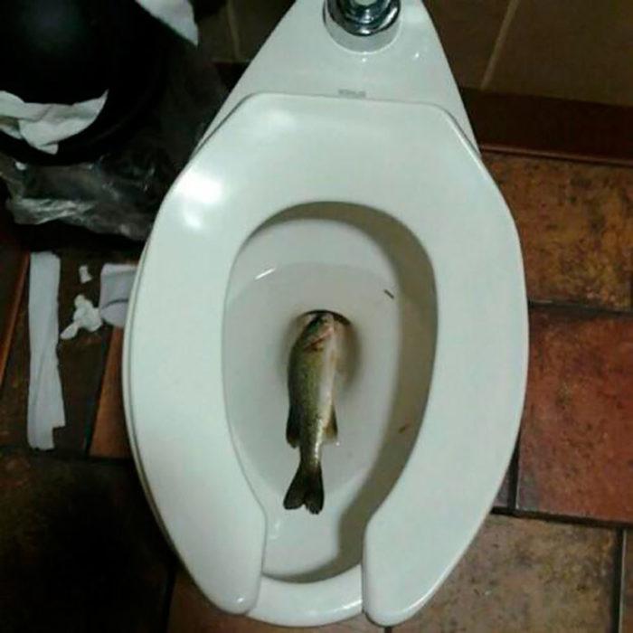pez muerto en taza de baño