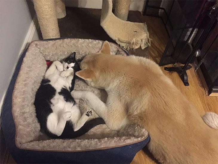 perro y gato recostados juntos