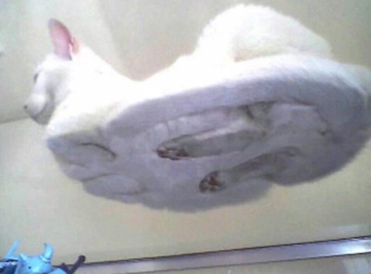 gatito con las patas metidas entre su cuerpo visto debajo de un cristal transparente