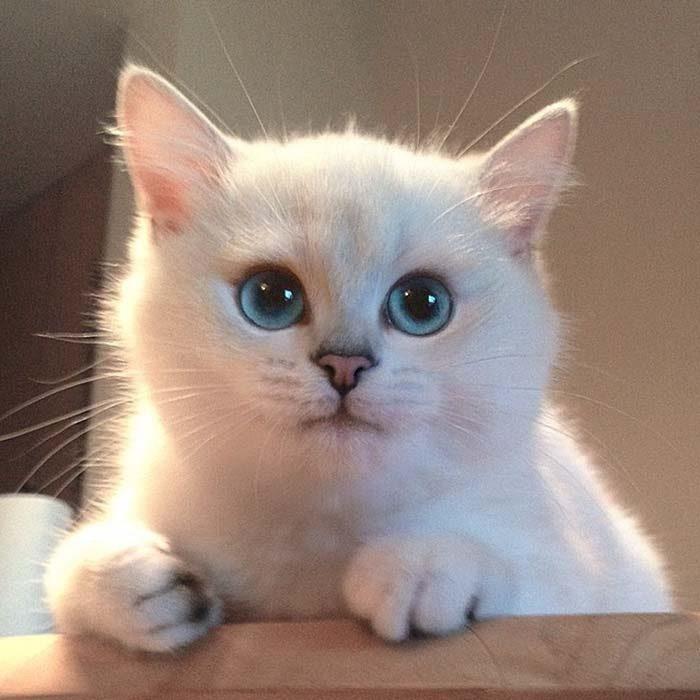 gatito blanco con unos ojos preciosos