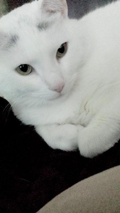 gatita blanca con sus patitas encogidas