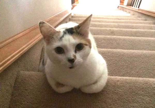gatito en las escaleras con alfombra