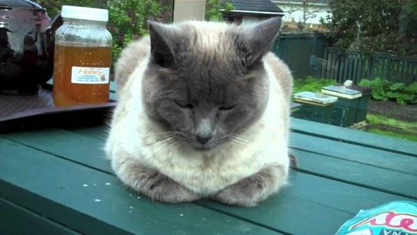 gatito dormido bajo sus patitas